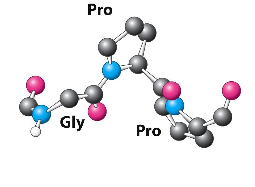 Collagen Type II có tác dụng gì trong việc tăng chiều cao?